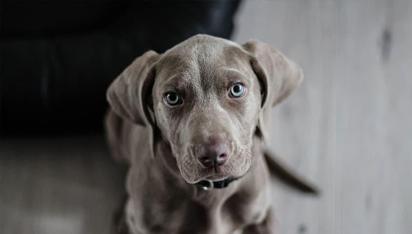 Sue for Dog Bite
